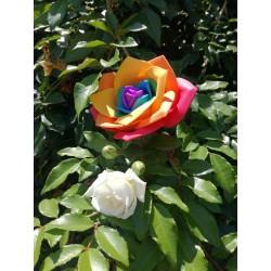 Rosa Arcobaleno in gomma crepla. Rosa Rainbow - Decorazione