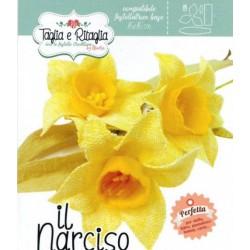 """FUSTELLA Narciso """"IL NARCISO"""" - Creattiva"""