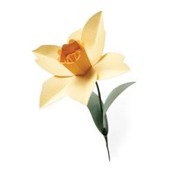 Fustella Narciso - Sizzix Bigz L Die - Daffodil 665107
